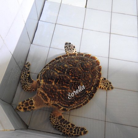 Turtle Conservation and Education Centre ภาพถ่าย