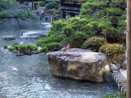 Matsudaya Hotel: 日式庭園