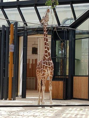 Tiergarten Schoenbrunn - Zoo Vienna ภาพถ่าย