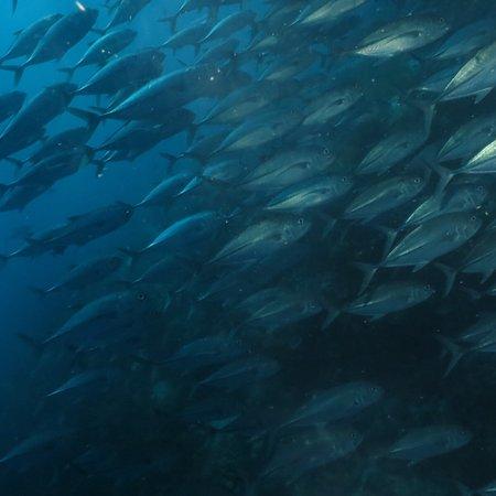Alona Divers today at Balicasag island