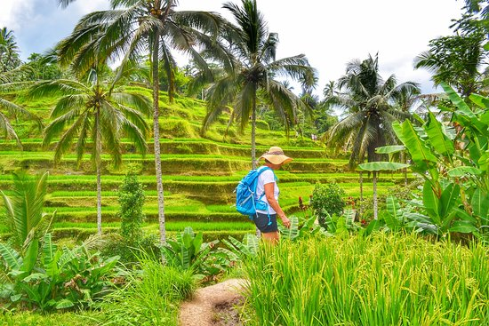 Cheap Tour in Bali - Tur Harian
