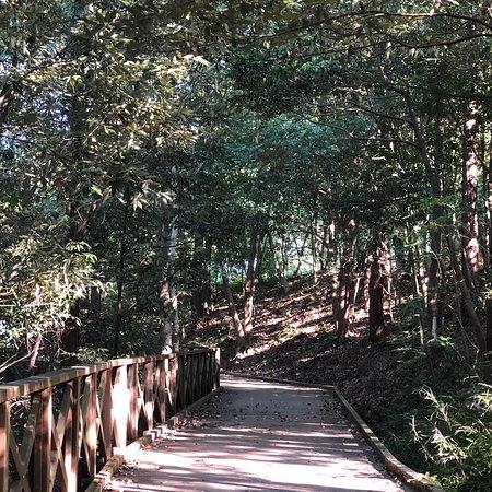 高崎市染料植物園