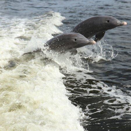 The Dolphin Explorer Photo