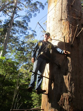 Dave Evans Bicentennial Tree : Didn't get too far