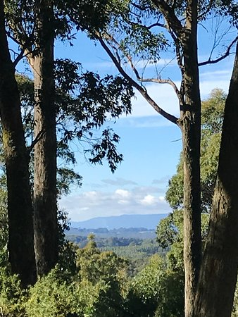 Secret Forest Walks : Amazing view