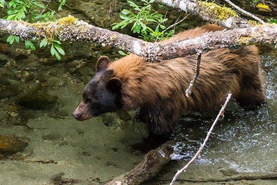 Juneau, AK: Hunting Salmon