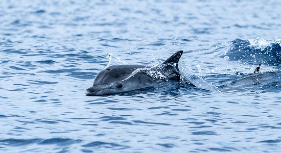Whale and Dolphin Watching in Madeira Island: :-)