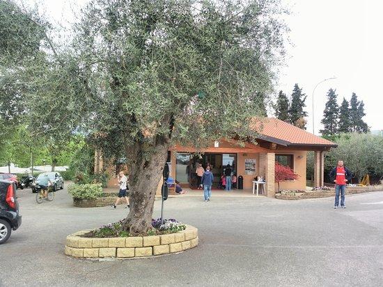 Camping Cisano San Vito: Zona reception