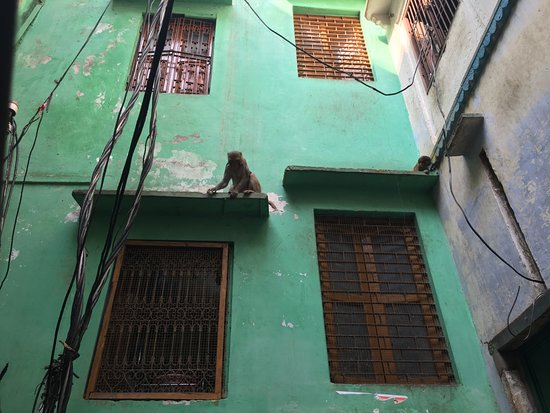 Marigold P Guest House: Early morning, monkeys can be seen