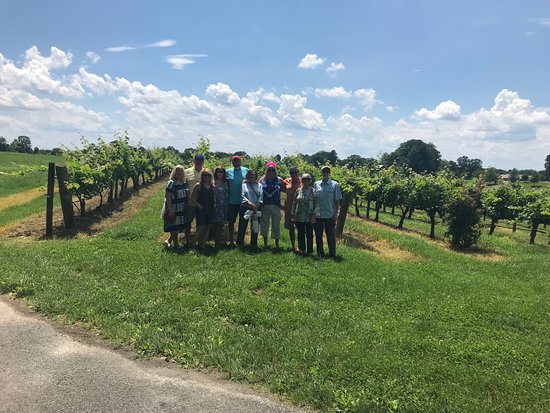 Dobson, NC: The beautiful vineyards on a beautiful day!