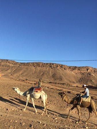 Morocco Joy Travel: The dromedaries