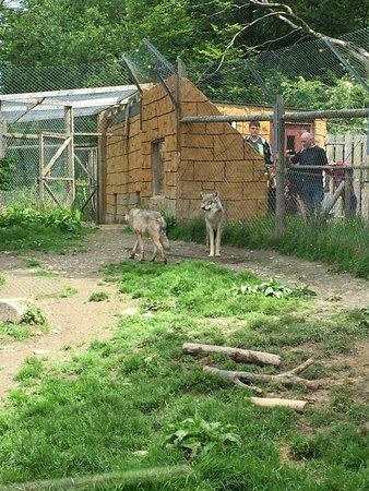 Exmoor Zoo Photo
