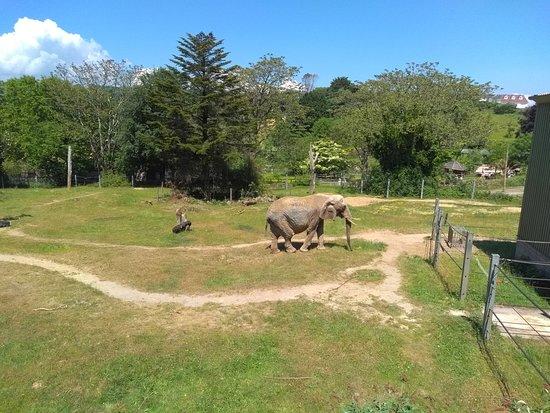 Paignton Zoo Environmental Park: Elephant