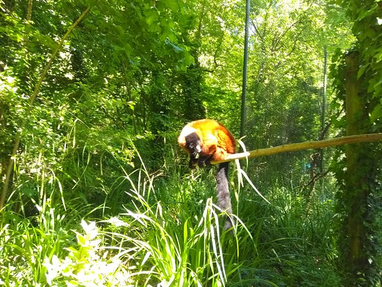 Paignton Zoo Environmental Park: Lemur