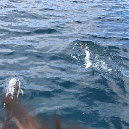 Ocean Quest Photo