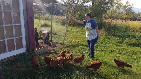 Applebrook Bed and Breakfast: New hens!
