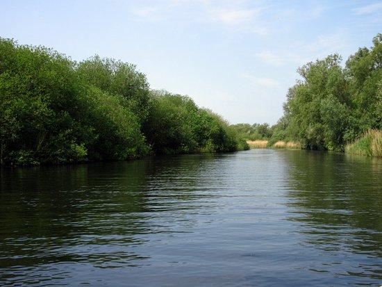 Big Dog Ferry: River Waveney from the Big Dog...