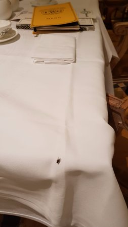 TWG Tea Garden at Marina Bay Sands: The annoying housefly at the next table