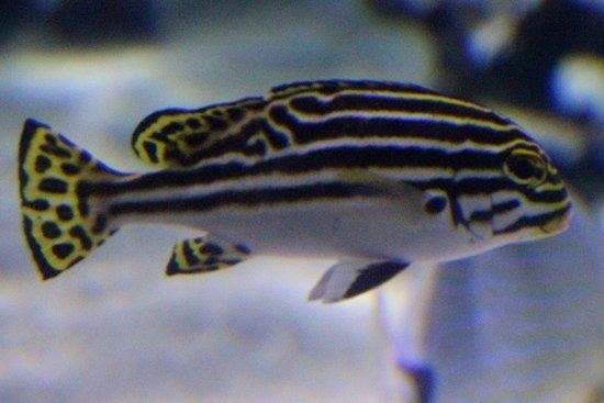 写真Aquarium La Rochelle枚