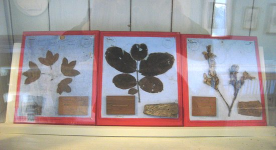 Pearse Museum: Flora preserving