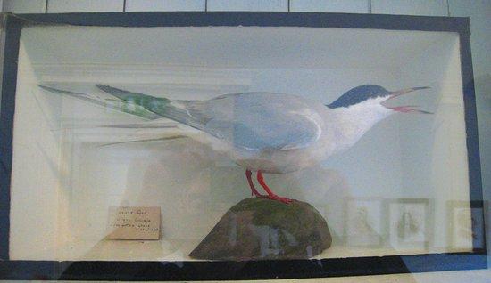 Pearse Museum: Native bird