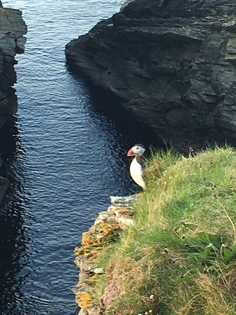 Westraak Tours: The Puffins
