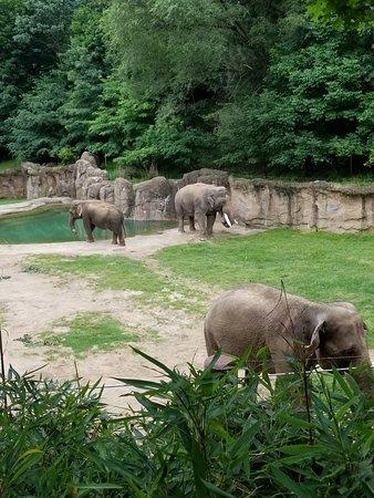 National Zoological Park: elephant habitat
