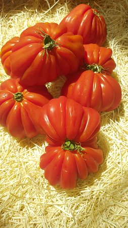 Barbatre, France: Tomates paillotedugois noirmoutier