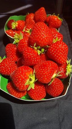 Barbatre, France: fraises paillotedugois noirmoutier