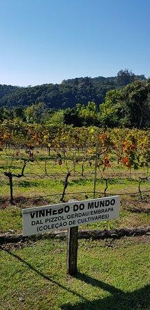 Dal Pizzol Vinhos Únicos: vinhedo do mundo