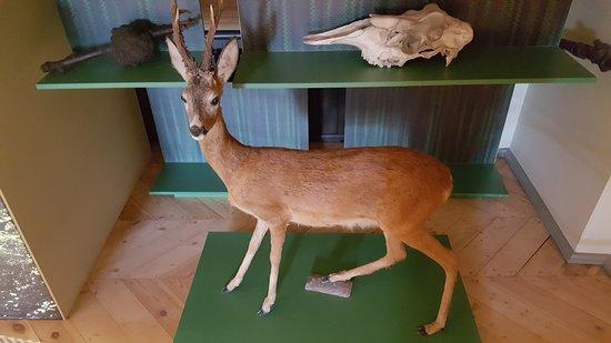 Jaunmoku Pils: More of the stuffed animals