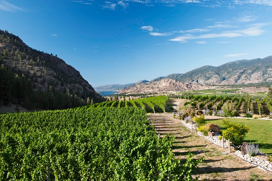 Okanagan Falls, Kanada: See Ya Later Ranch Vineyard