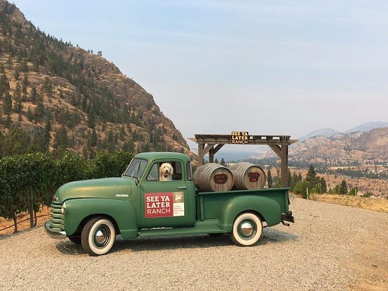 See Ya Later Ranch: 2017 Vineyard Dog - Abby