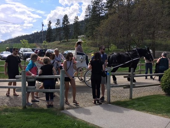 See Ya Later Ranch: Celebration of Neighbours - carriage ride