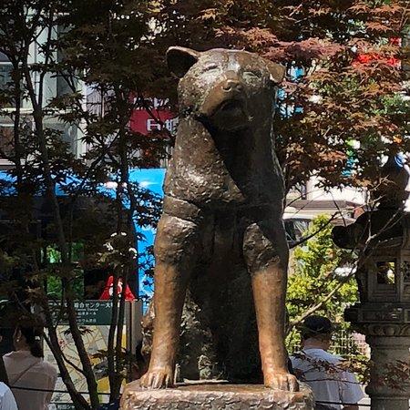 ฮาจิโกะ ภาพถ่าย