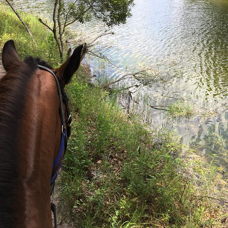 In The Breeze Horse Ranch (Tampa) - 2019 All You Need to
