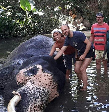 Lanka Inora Travels: Would you like to Bath an Elephant in sri lanka ?