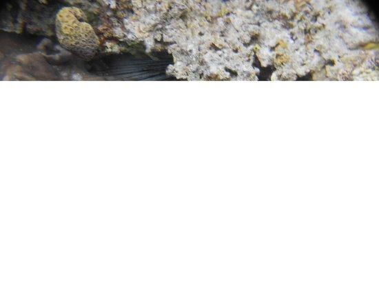 The Blue Abyss Dive Shop : Oursins Diadèmes Tuble Sanctuary