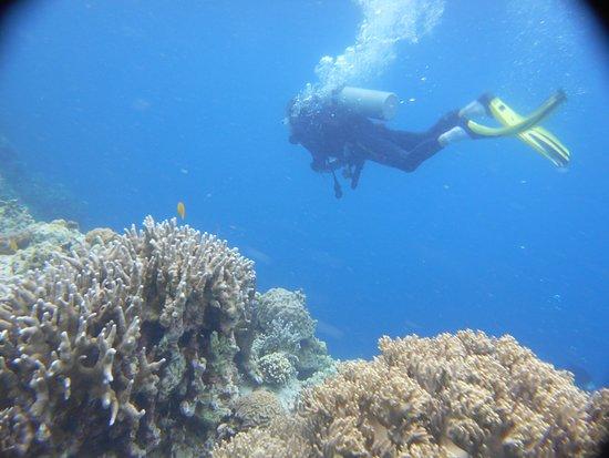 The Blue Abyss Dive Shop : Jean-Claude survole le jardin de corail pour le Filmer Tuble Sanctuary