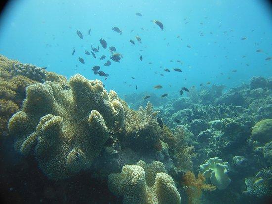The Blue Abyss Dive Shop: Très belle promenade sur les Coraux de Dolphin House