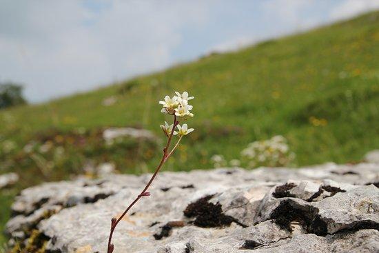 Valle delle sfingi: 03/06/18; Stelo solitario al vento.