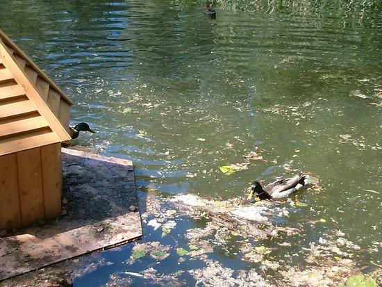 Парк Сад Будущего: Утки возле домика