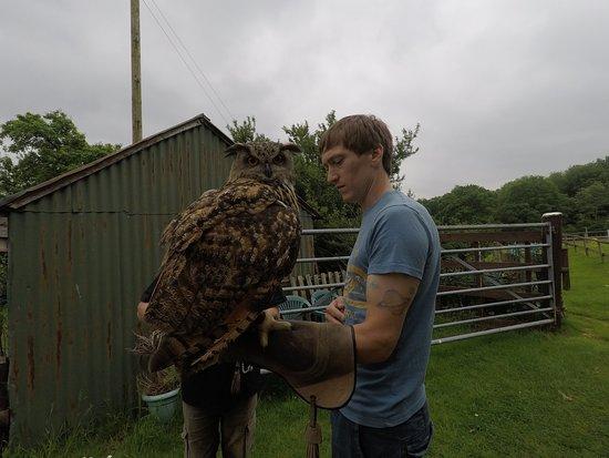 Machynlleth, UK: European Eagle Owl