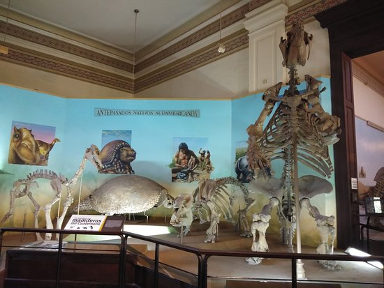 拉普拉塔自然科学博物馆照片