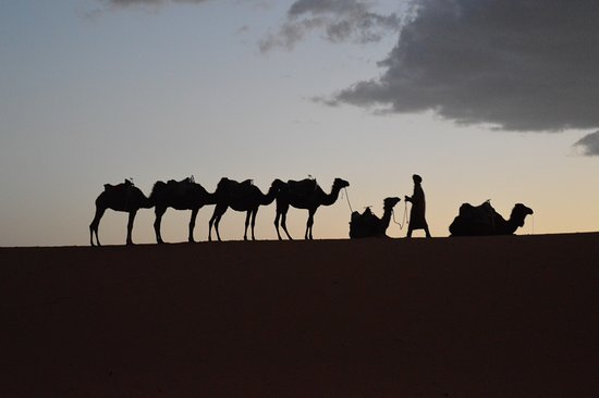 Easy Morocco Tours: camellos en la llegada al campamento