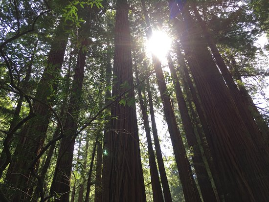 The One Day in San Francisco Tour with Alcatraz: Muir woods, May 2018