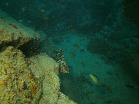 Deep Blue Diving Base照片