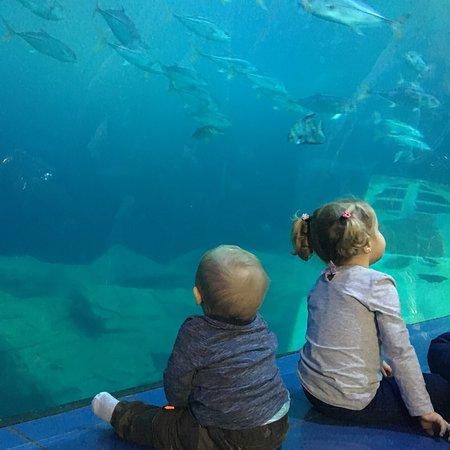 National Marine Aquarium Photo