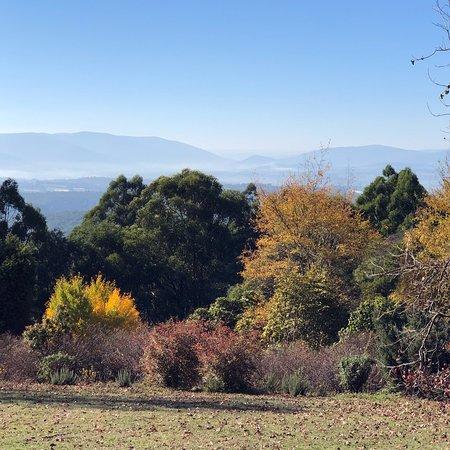 Dandenong Ranges Botanic Garden ภาพถ่าย
