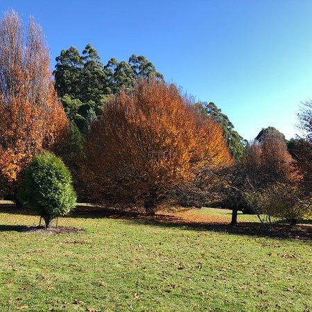 National Rhododendron Gardens: photo2.jpg